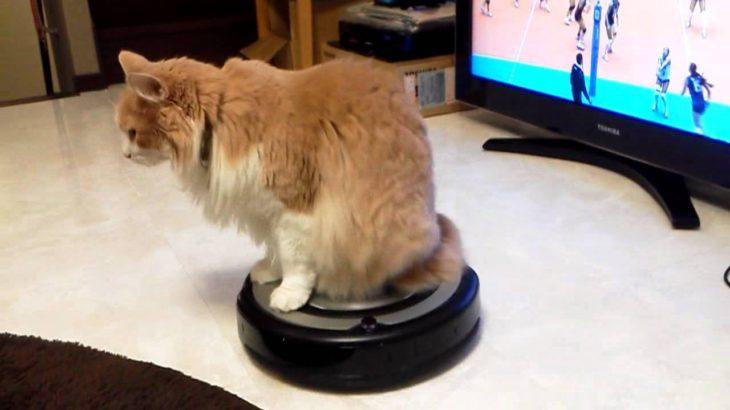 ルンバに乗るネコ Cat riding ROOMBA
