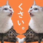 猫のフレーメン反応 子猫を毛繕いする兄猫