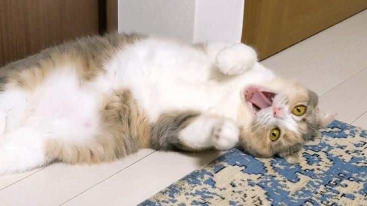 【悲報】ヤバすぎて手に負えない猫
