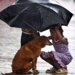 「泣けるほど感動」なぜこのような愛する犬は放棄されたのですか?