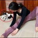 「面白い動物」あり得ないことをする犬, 猫・おもしろ犬, 猫のハプニング, 失敗集 #505