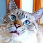 クサすぎだろ…魂が抜けたような猫の変顔が面白すぎた