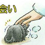 【感動動画 猫】Twitter&Instagramで話題「出会い」飼い主さんと 捨て猫「ぷん太」の 素敵な出会い chinta ch