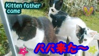 野良猫家族大集合!父猫が子猫を見守る幸せな時間・・・うちの猫ちゃんたちカワイイTV