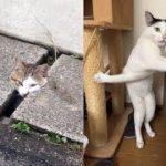 猫ちゃんが詰んでしまったドジな瞬間がじわじわ面白いw~The moment a clunker that cat had picking interesting.