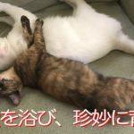おっとりサビ子猫、ミスター母性のもと珍妙に育つ The laid-back tortoiseshell kitten became funny
