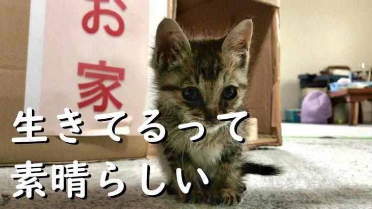 #瀕死の子猫#保護猫 子猫の大胆な行動にびっくり!Surprised by kitten behavior #423