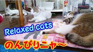 お部屋でまったりくつろぐ猫家族・・・うちの猫ちゃんたちカワイイTV