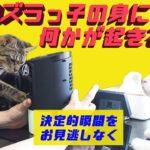 【猫のハプニング】イタズラっ子にハプニング!