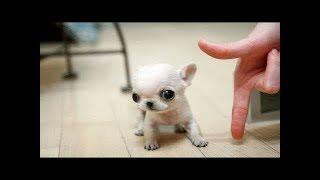 「絶対笑う」最高におもしろ犬,猫,動物のハプニング, 失敗画像集 #412