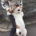 猫ちゃんのイタズラの犯行現場がなぜか和むw~A crime scene of a mischievous cat.