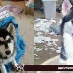 2019「絶対笑う」最高におもしろ犬,猫,動物のハプニング, 失敗画像集 #54