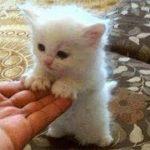 「猫かわいい」 すごくかわいい子猫 – 最も面白い猫の映画 #181