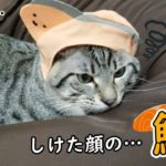 鮭になって不服な猫にハプニングが起きました…w